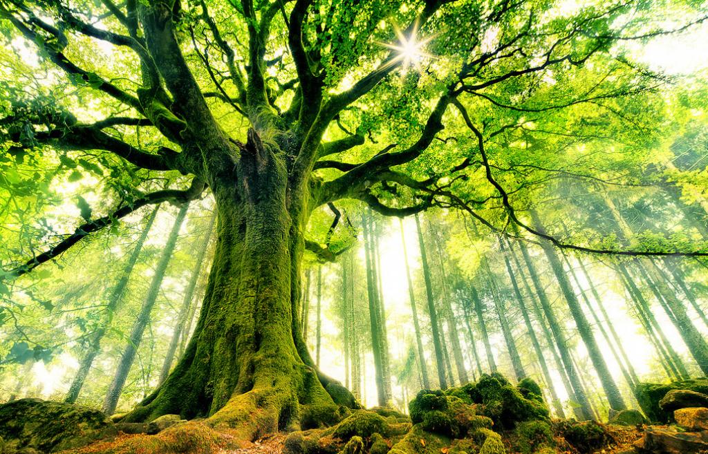 El Florecimiento del Árbol del Bien. Nueve llaves del Catarismo
